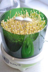 清炒绿豆芽的做法步骤5