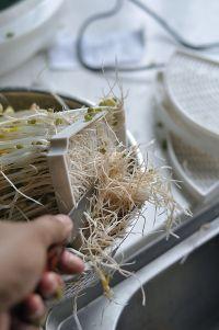 清炒绿豆芽的做法步骤7