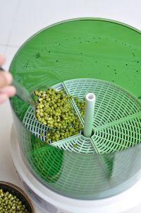 清炒绿豆芽的做法步骤1