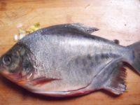 红烧武昌鱼——美味下酒菜的做法步骤1