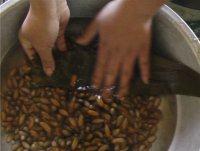 高粱米红枣粽子的做法步骤8
