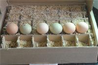 彩色蔬菜鸡蛋饺子的做法步骤1