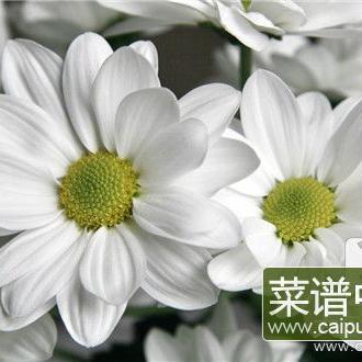 药用菊花的种类