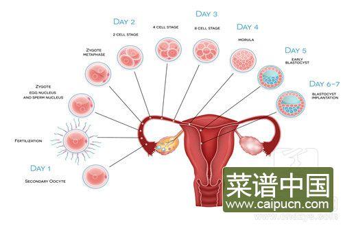 卵巢癌忌口