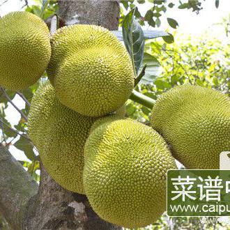 菠萝蜜和芒果能一起吃吗